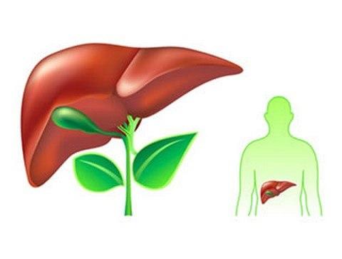 Biện pháp giúp giải độc gan đúng cách